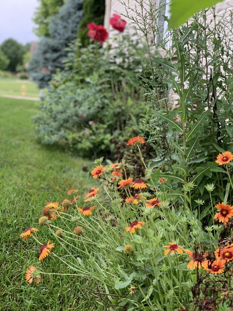 Gardening and sustainability